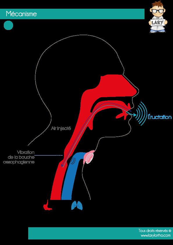 Mecanisme-Voix-Oro