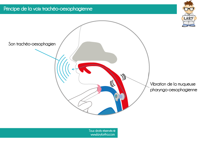 Vibration de la muqueuse